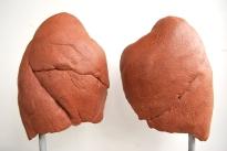 Modelage de poumons à echelle 1