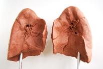 modelage de poumons, face interne